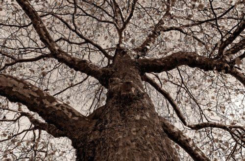Article : Une leçon à apprendre de la « chute » de Mugabé